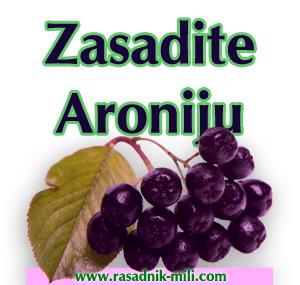 aronija_sadnice_prodaja
